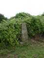 hidden in hedge