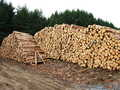 Log piles and new loading area