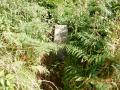 A clear channel into the bracken