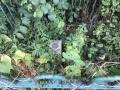 1. YSM0415 Flax Bourton (R)